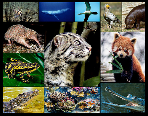 an analysis of the many endangered species in the world and the cheetah as one of them